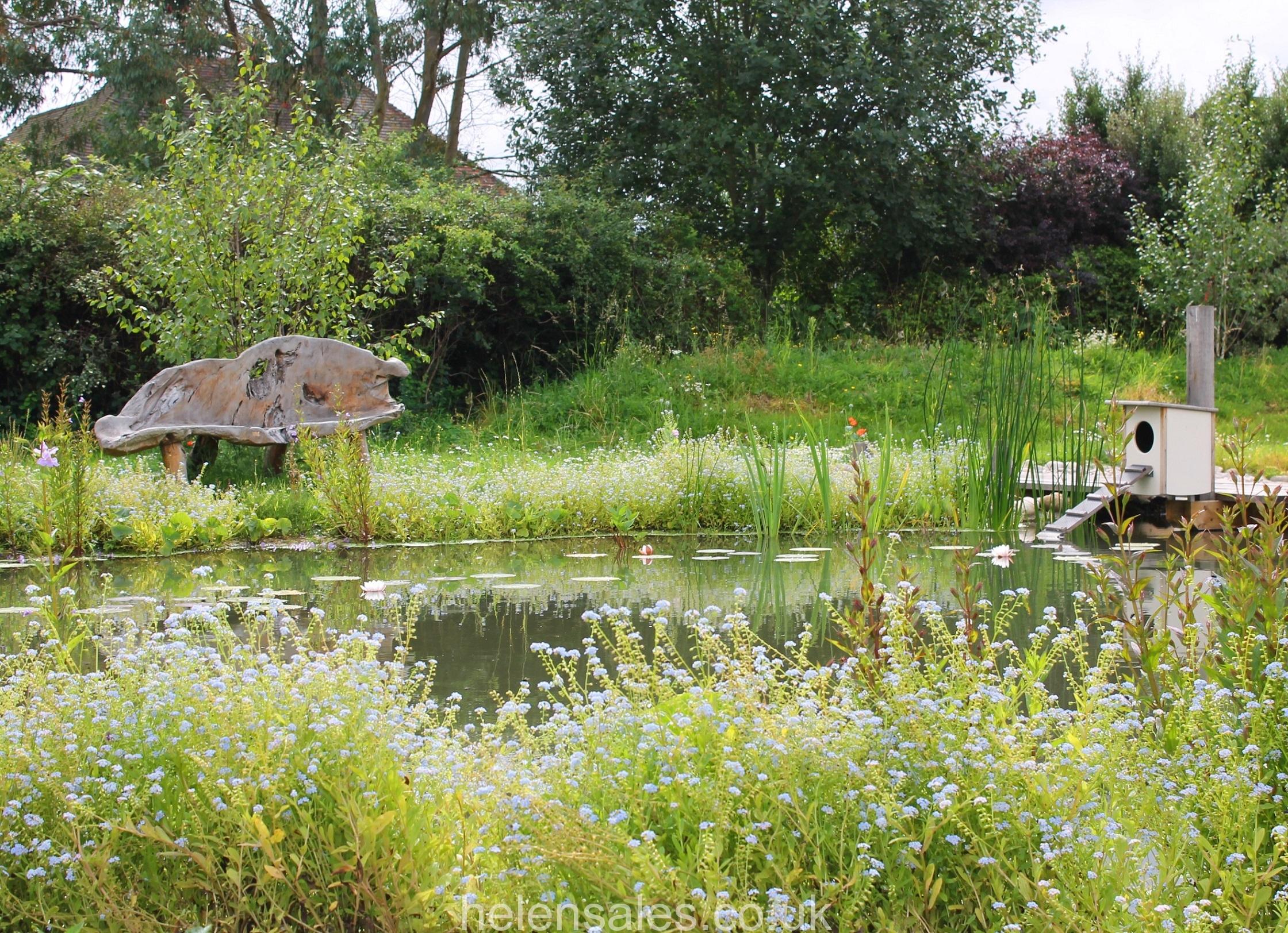 Wildlife pond berkshire helen sales garden design for Wildlife pond design uk